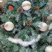 drvce sa češerima i snijegom